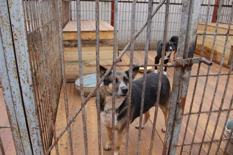 ВПерми хотят построить новый приют для собак